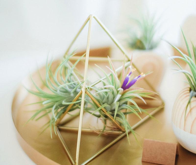 8 Steps to Create a Cozy Minimalist Home